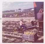 Farm work 1972